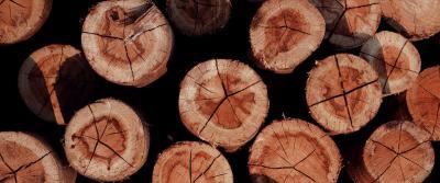 De prijs van hout stijgt wereldwijd naar recordhoogten